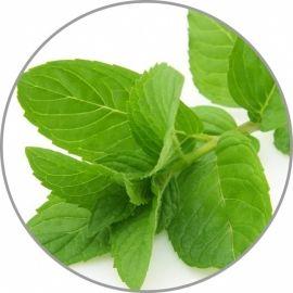 Medisana pipirmečių aroma esencija 10 ml
