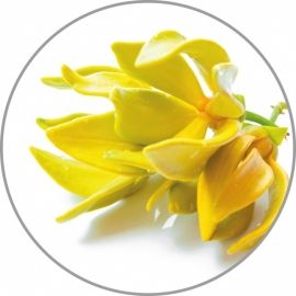 Medisana Ylang-Ylang aroma esencija 10 ml
