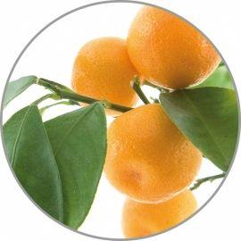 Medisana apelsinų aroma esencija 10 ml